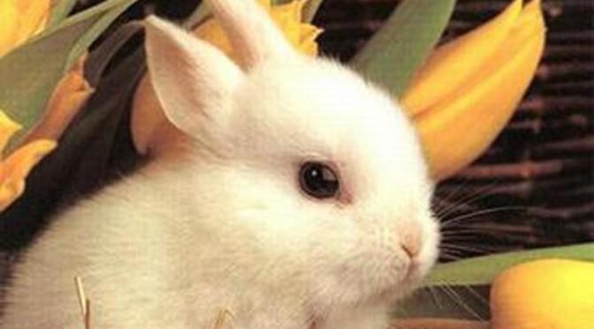 Alimentazione del coniglio da compagnia