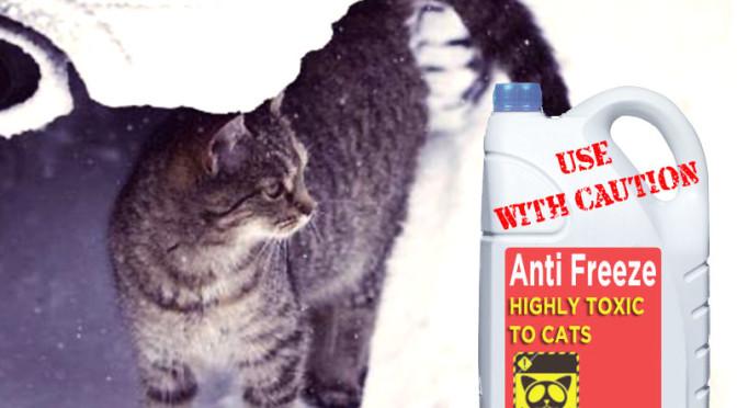 AVVELENAMENTO DA ANTIGELO (Glicole Etilenico) nei piccoli animali