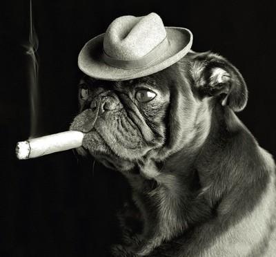 Avvelenamento da Nicotina nel cane e nel gatto