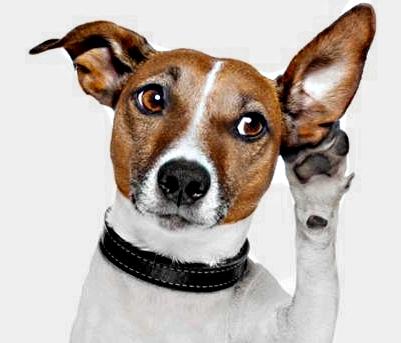 L'udito del cane