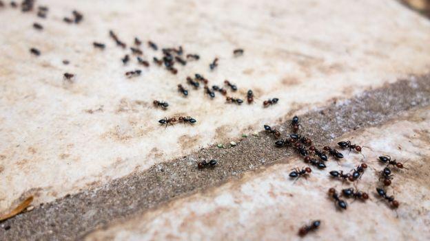 Aiuto! Le formiche in casa…
