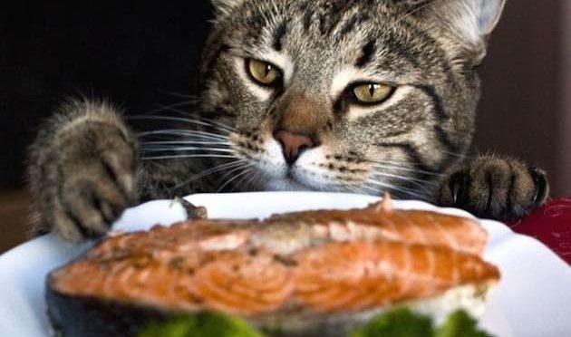 Dieci regole per l'alimentazione del Gatto