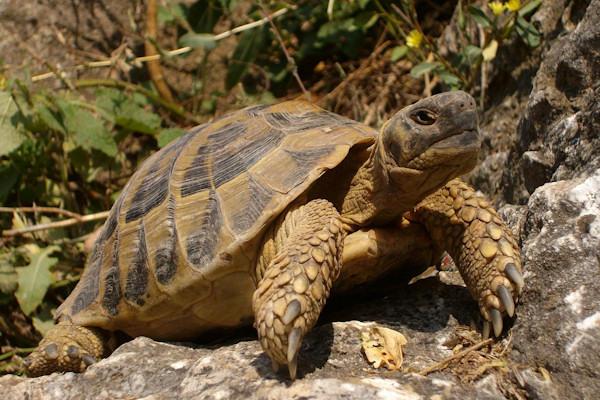 tartarughe terrestri la messa in letargo ambulatorio
