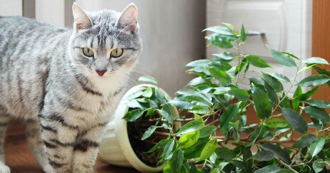 Gatti e piante d'appartamento: una convivenza spesso complicata