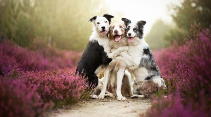 Quando è meglio sterilizzare il cane