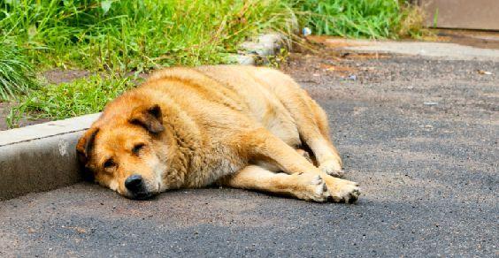 Omissione di soccorso per animali