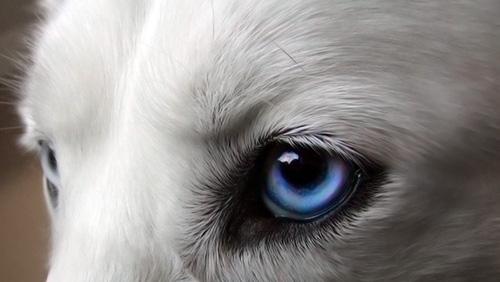 La vista del cane