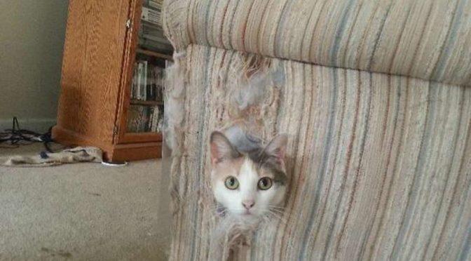 Caro il mio divano!