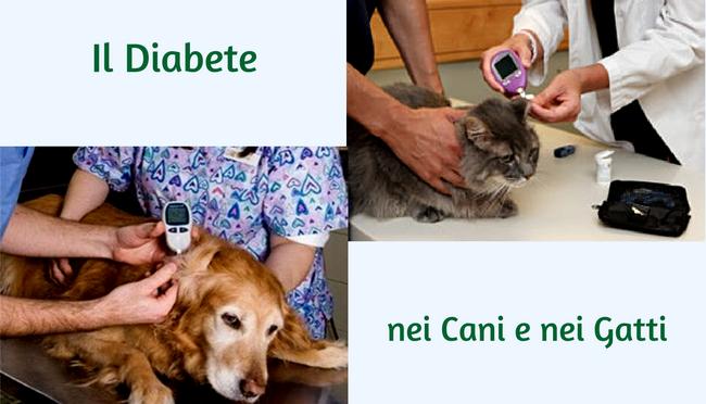 Glicemia e diabete mellito Cane e Gatto