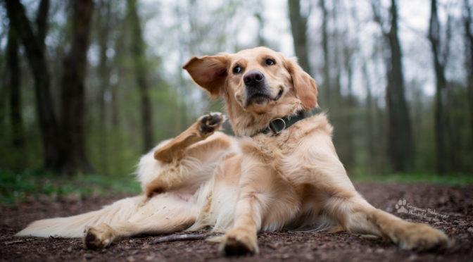 Il prurito nel cane